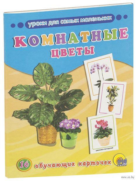 Комнатные цветы. 16 обучающих карточек — фото, картинка